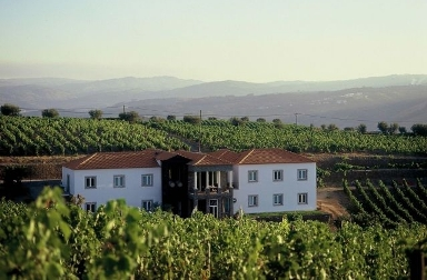 portal_vineyards